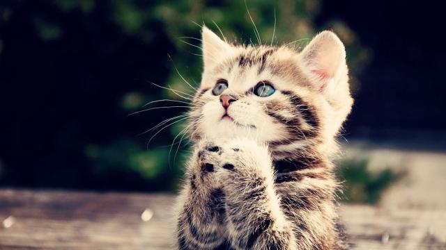 Les 10 bonnes raisons d'avoir un chat (Plutôt qu'un enfant ... - allomamandodo.com