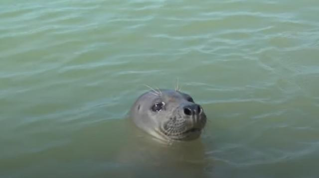 Researchers carry out annual seal census in the Thames. [Image source/Daily Mail YouTube video]