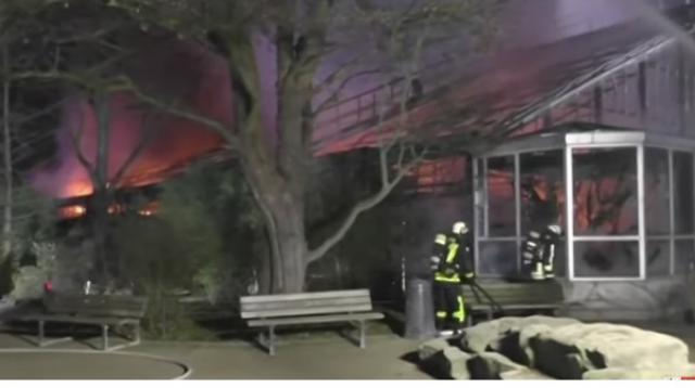 More than 30 animals die in German zoo fire. [Image source/Sky News Australia YouTube video]