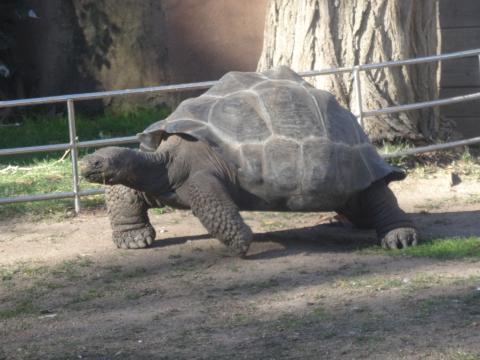 Tortuga en el Zoo de Barcelona