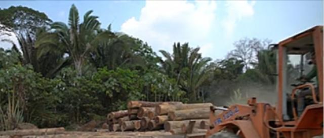 Deforestation in Brazilian Amazon surges to 12-year high. [Image source/RTE News YouTube video]