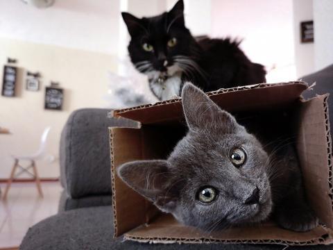 chat s'il aime le carton ce n'est pas uniquement pour son confort
