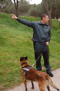 El guardia informa donde se encuentra el cebo envenenado que su perro localizará