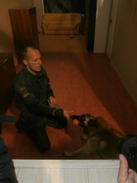 Los perros entienden el proceso de detección como un juego al que al final son premiados