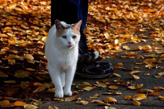Si votre chat traine dans vos jambes ce n'est pas uniquement pour attirer l'attention