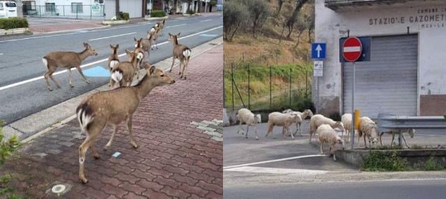 En la cuarentena, animales pasean en las calles | Mundo en Positivo - mundoenpositivo.com