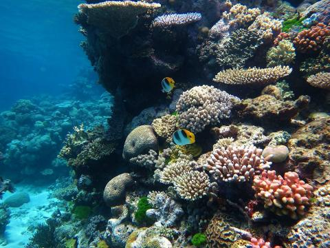 Part of the Great Barrier Reef marine park. [Image source/Wise Hok Wai Lum, Wikimedia Commons]