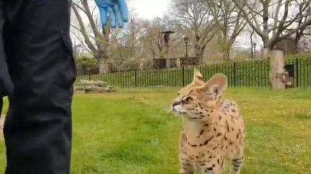 London Zoo on coronavirus lockdown. [Image source/BBC London YouTube video]