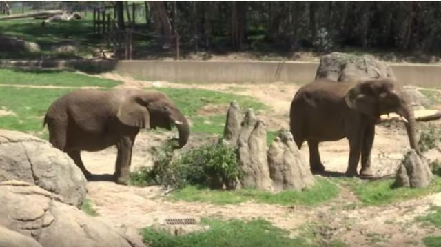 Zoos in coronavirus shutdown with no guests. [Image source/Associated Press YouTube video] https://www.youtube.com/watch?v=Sc52QDYV-Wo