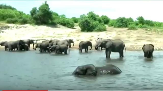 In Botswana, people pay to kill elephants. [Image source/Reuters YouTube video]