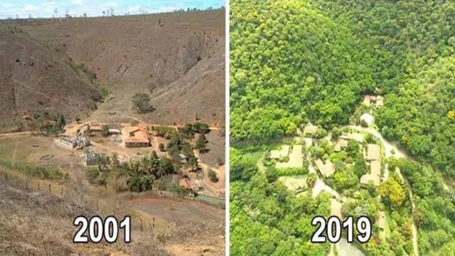 Disboscamento foresta amazzonica dal 2001 al 2019
